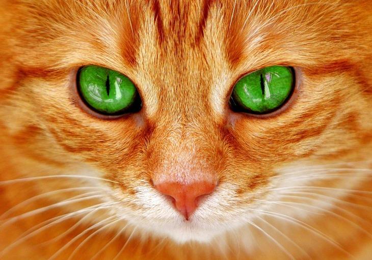 cat-2808675_1920
