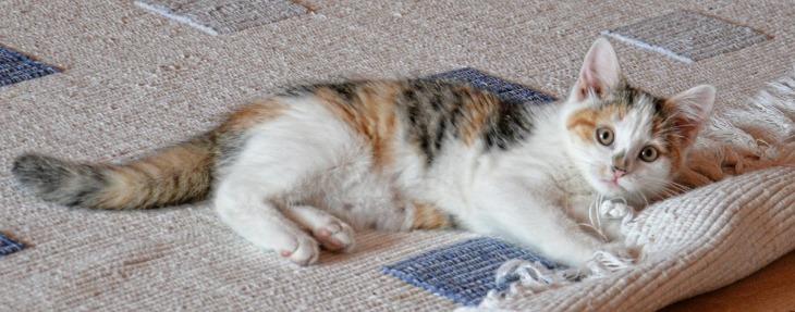 cat-535011_1920