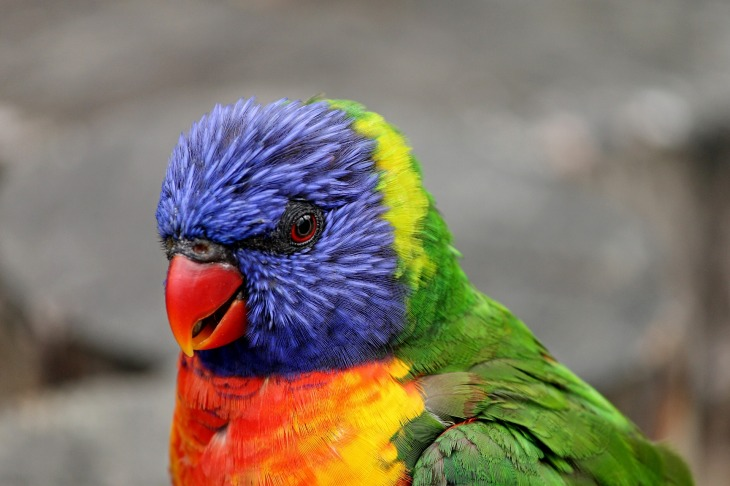 parrot-3017449_1920