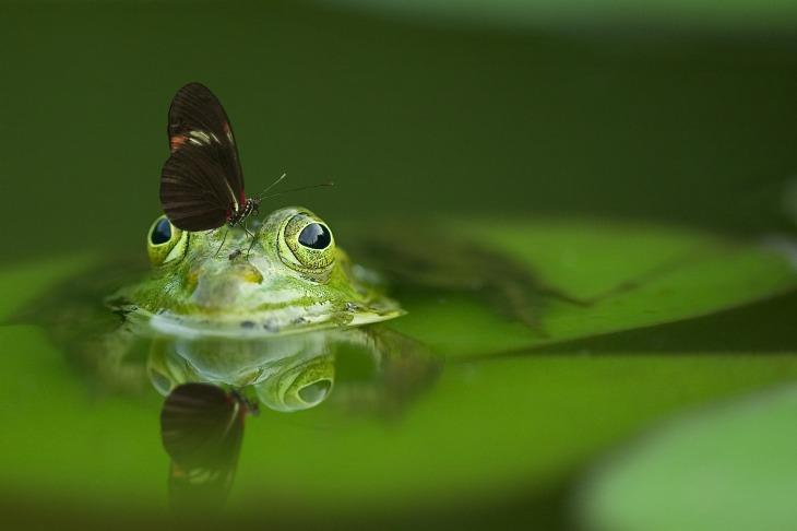 frog-540812_1920.jpg