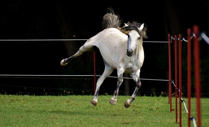 horse-2574327_1920.jpg